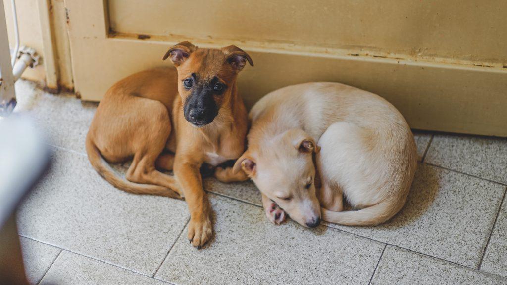 Justiça condena mulher por maus-tratos a animais domésticos